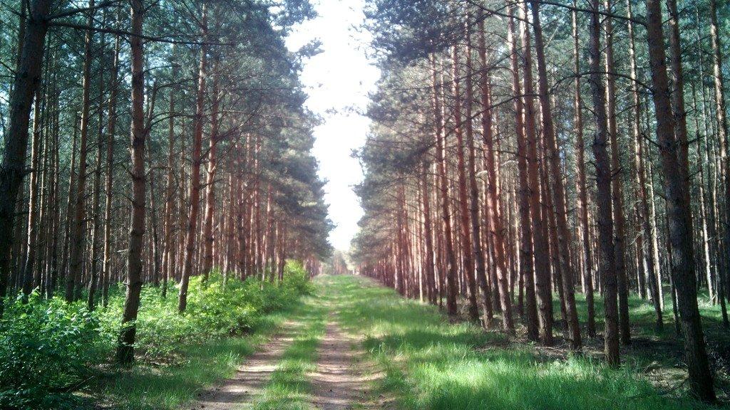 El camino es maravilloso