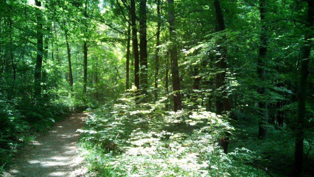 Precioso bosque