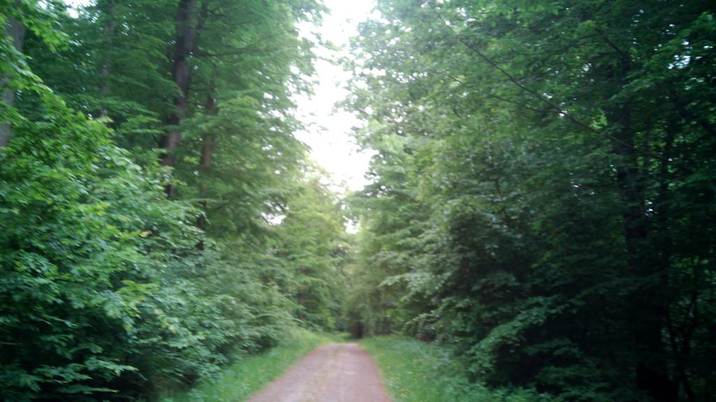 El camino entre bosques