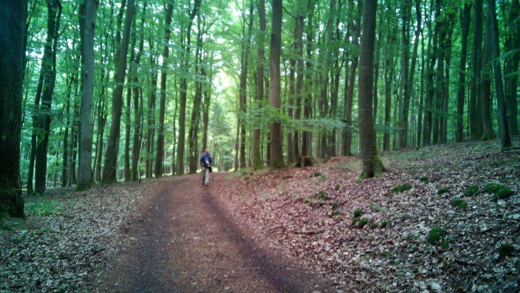Bonitos bosques