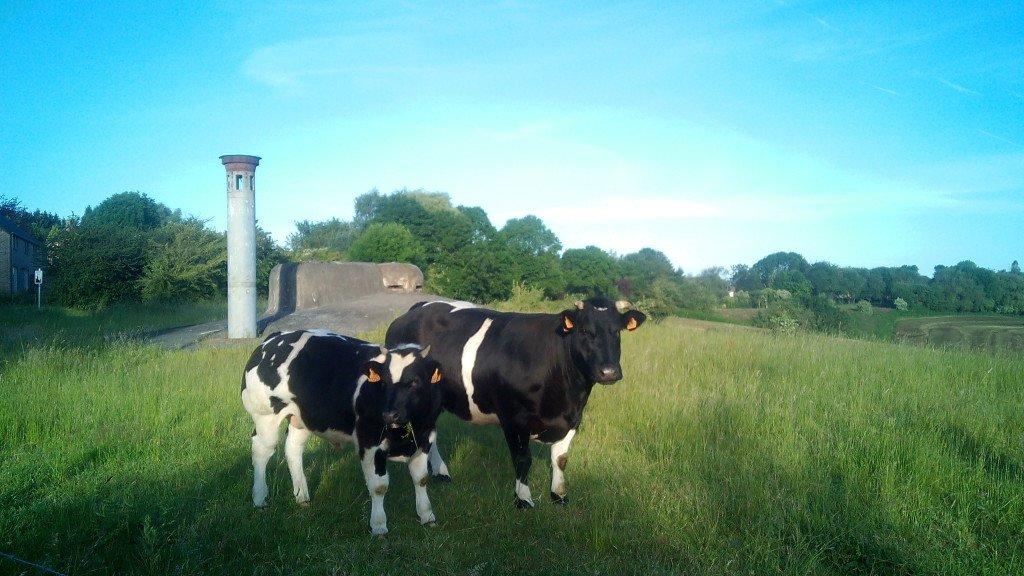 La vache qui rit y su ternero