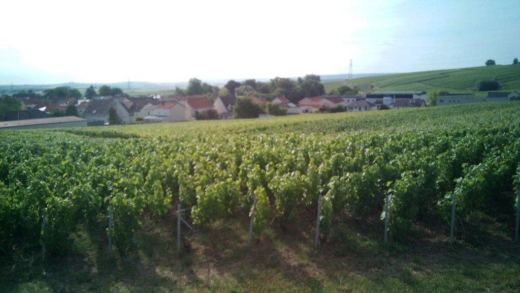 Viñedos de la zona de La Champagne