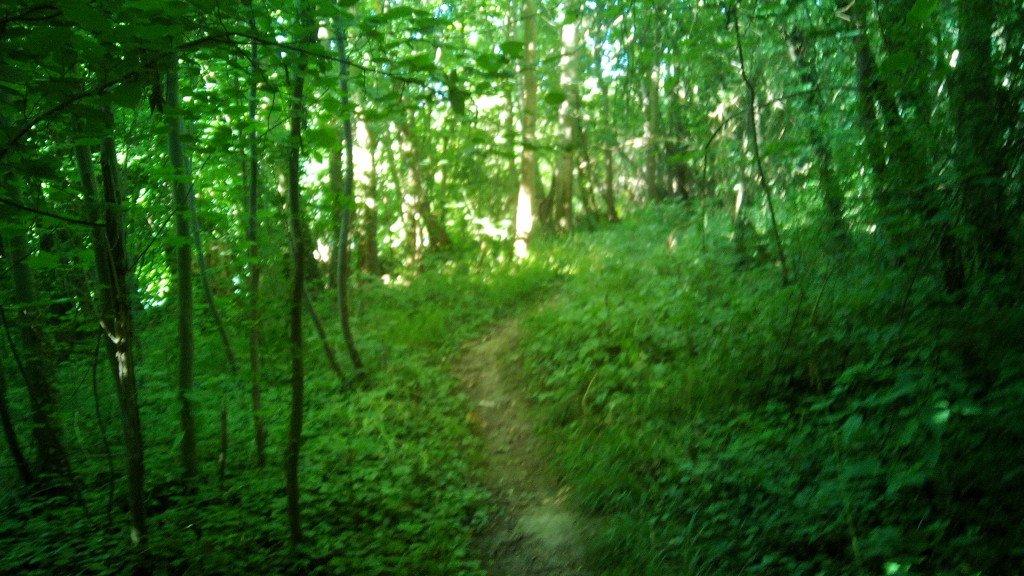 Por el Camino Verde
