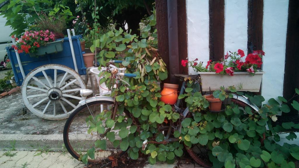 El jardin de nuestro albergue