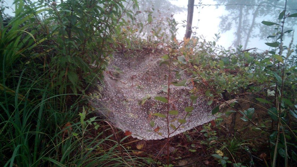 Tela de araña con rocío