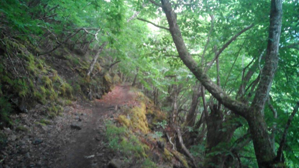 Camino por el bosque, bajando hacia el estanque de Salime