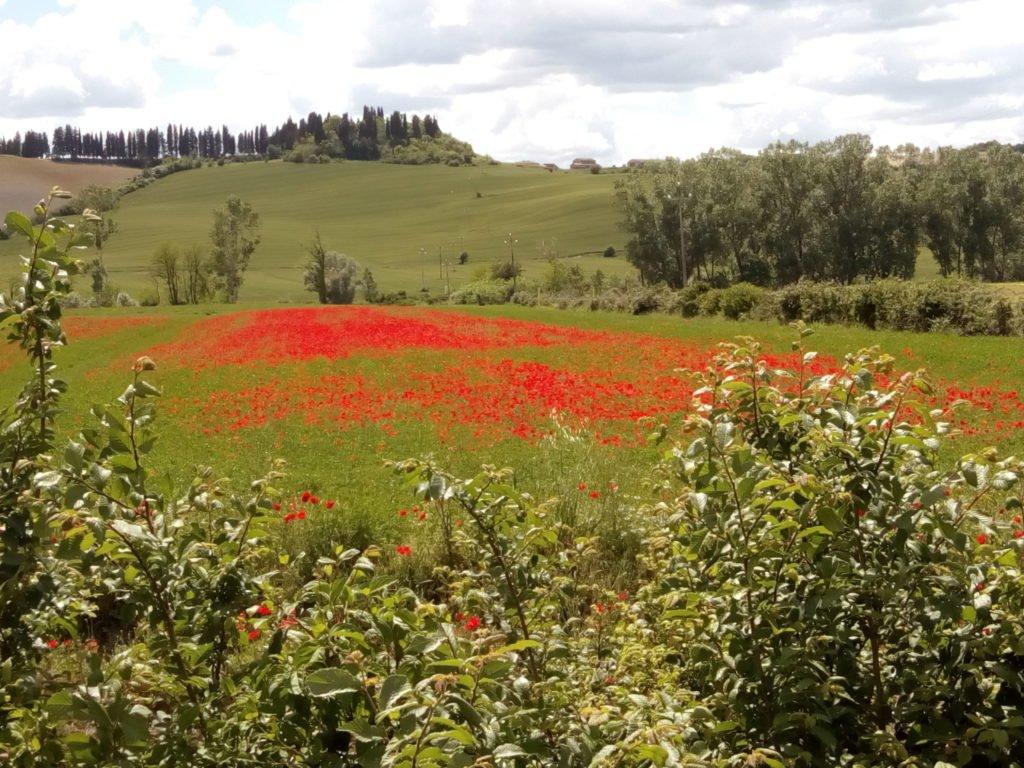Si, es bonita la Toscana