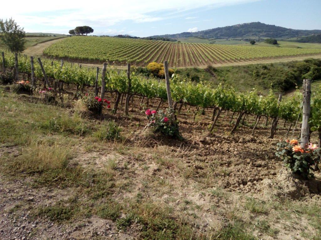 Viñas y rosales
