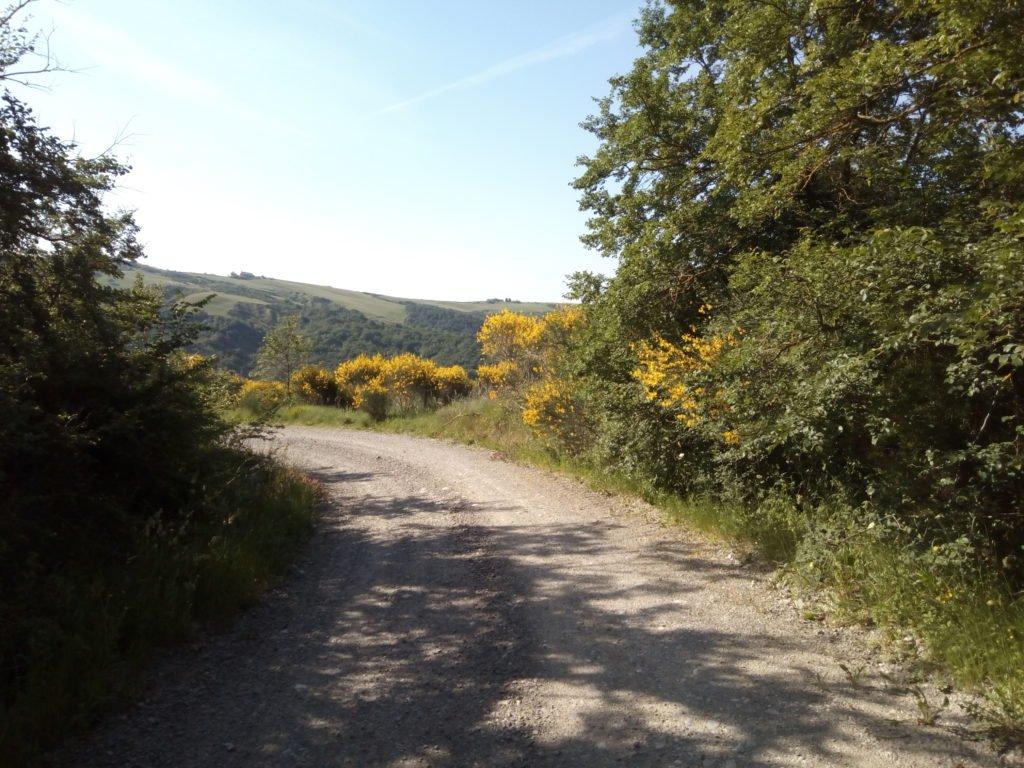 Una imagen del Camino