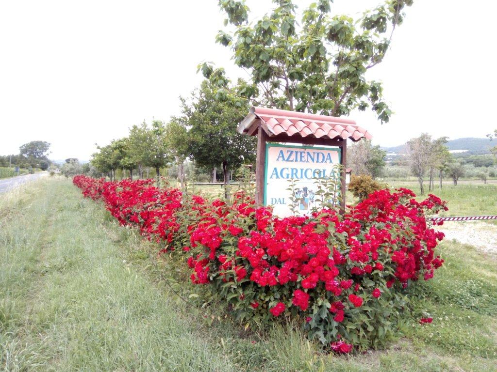 Hacienda Agrícola en la Vía Cassia