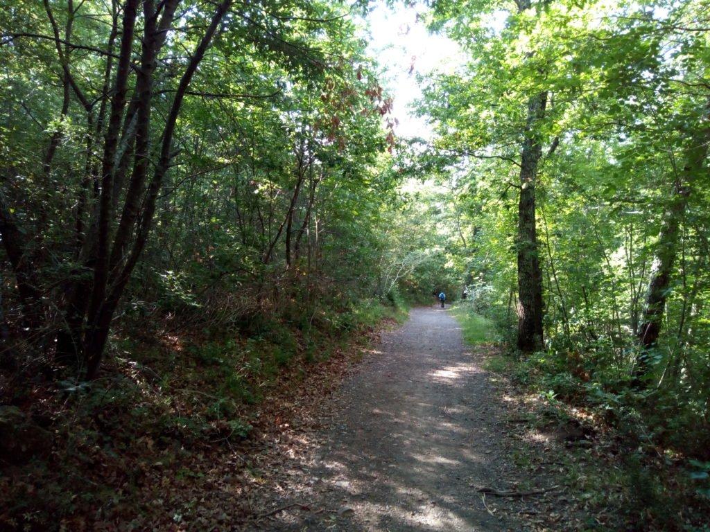 El camino y un peregrino delante