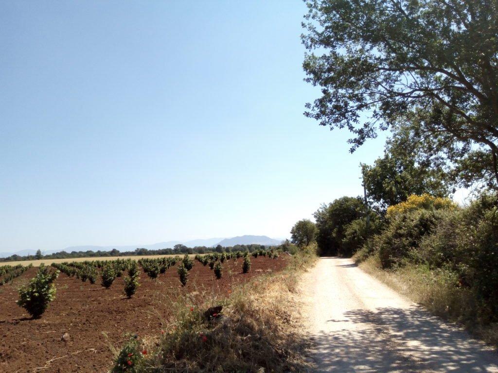 El camino, con viñas a la izquierda