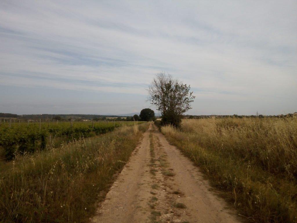 Camino bordeado de campos