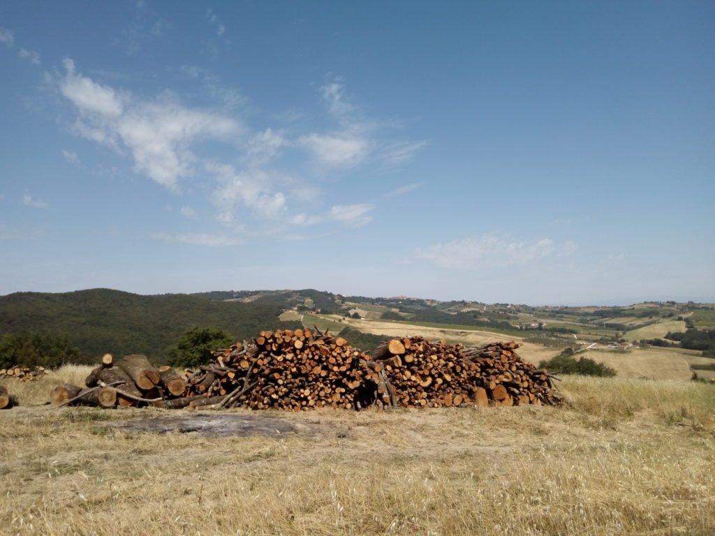 Pilas de madera cortada junto al camino