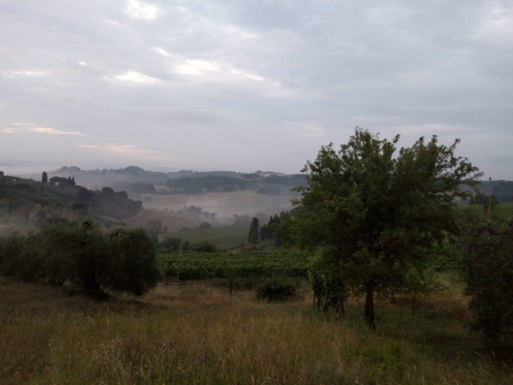 Campos con niebla al amanecer