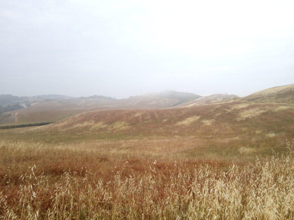 El calor empieza a agostar los campos