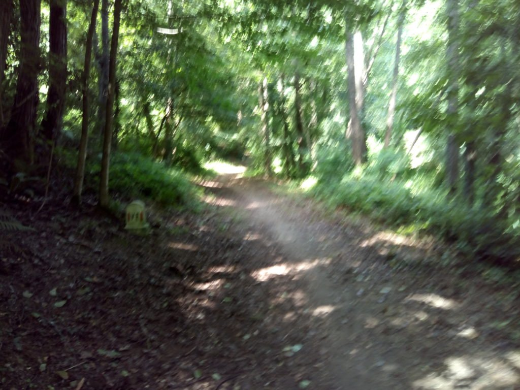 El camino, entre árboles