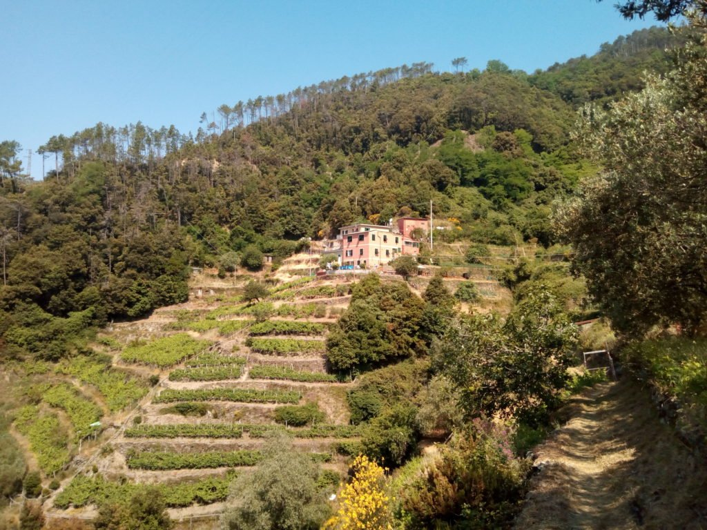 Terrazas de cultivo