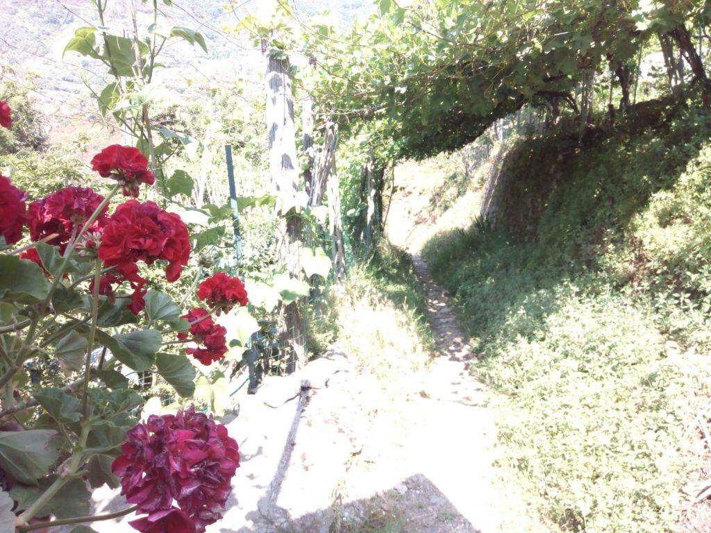 Flores y camino