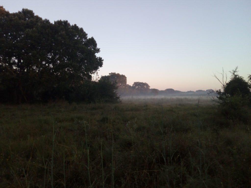 Campos antes de amanecer