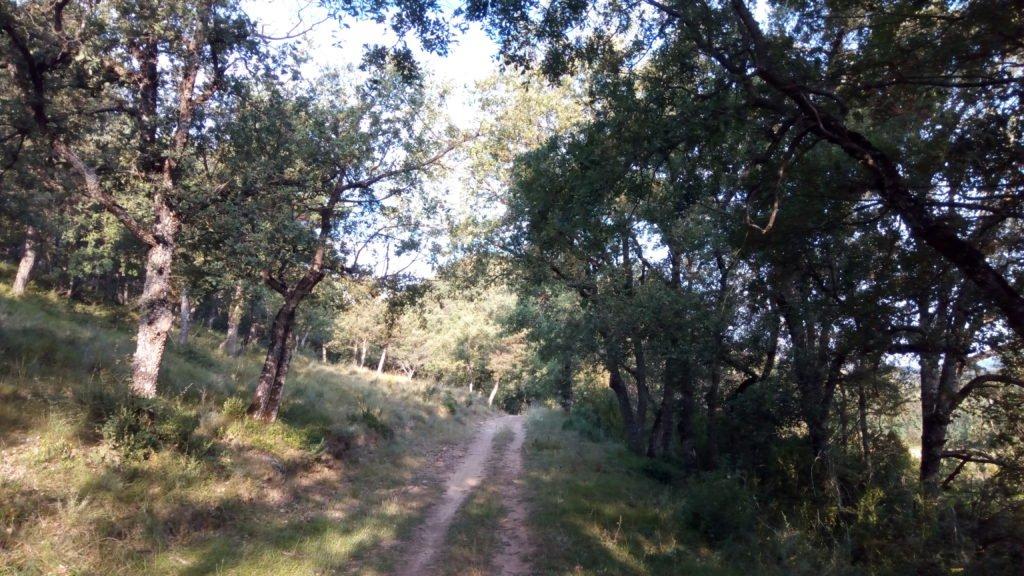 El camino cerca de Jaca