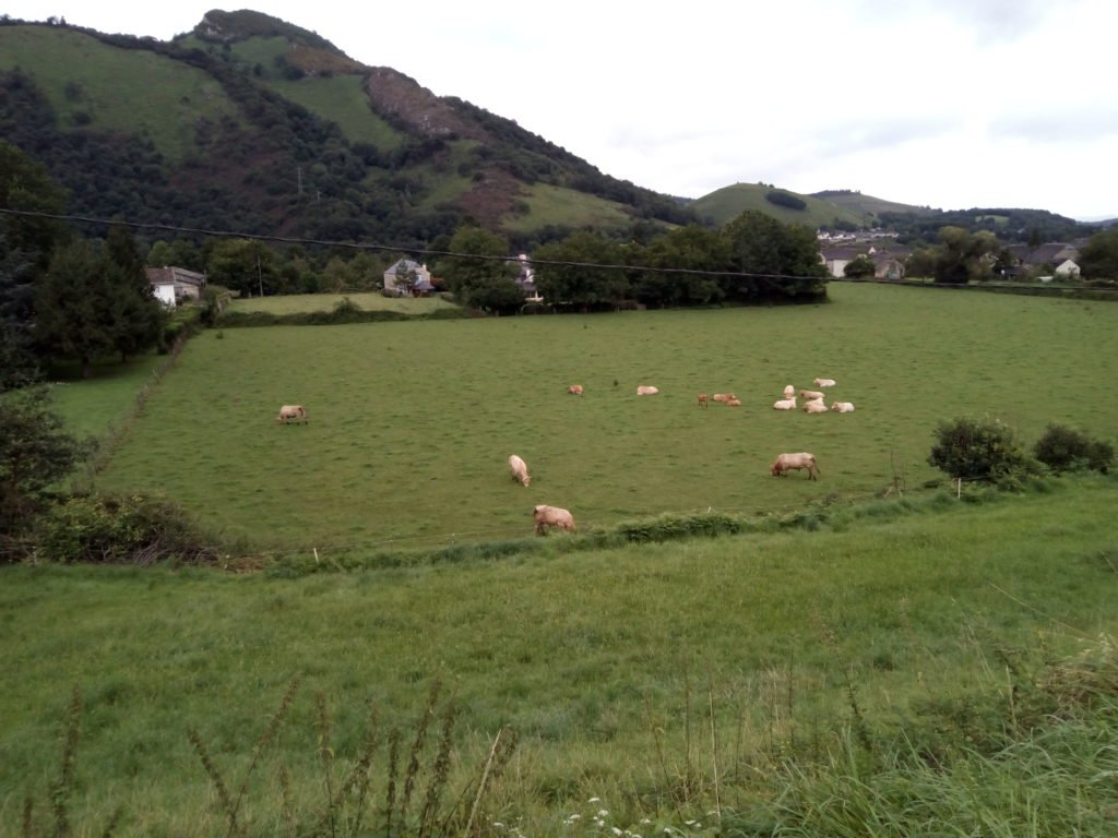 Un prado con vaquitas