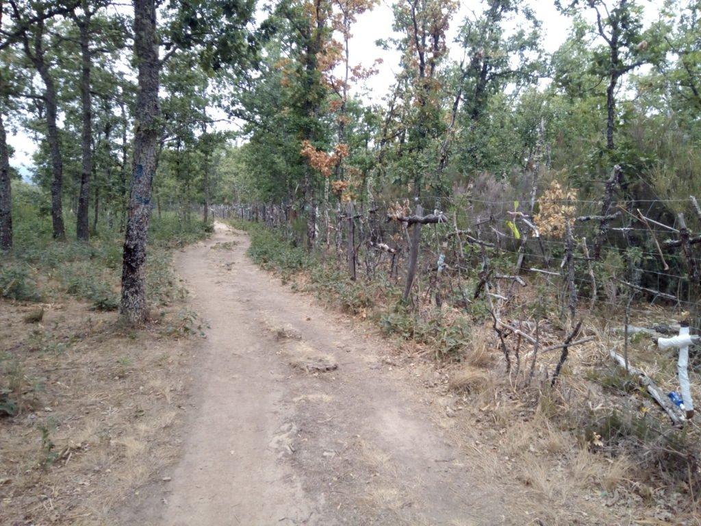 Cruces muy cerca de Rabanal del Camino