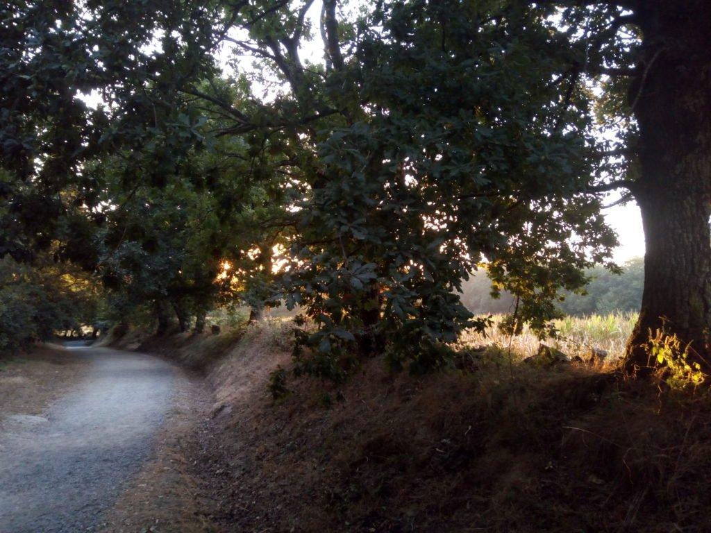 El camino bajo árboles