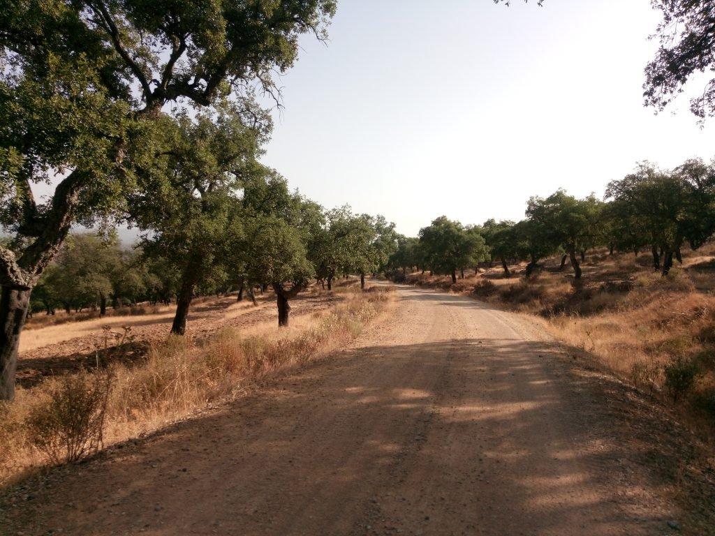 El camino por El Berrocal