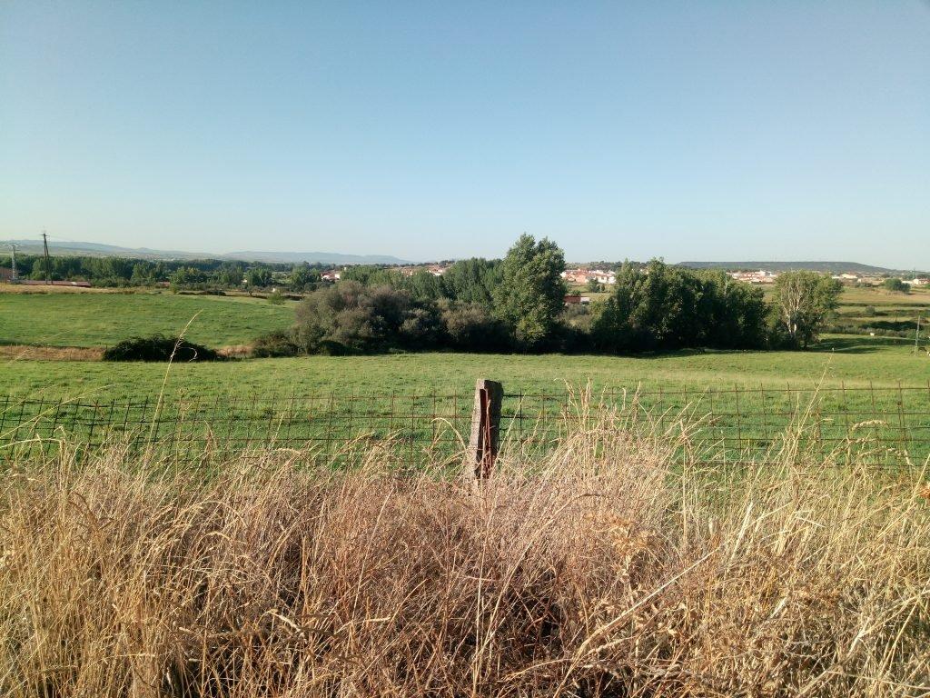 Verdes praderas