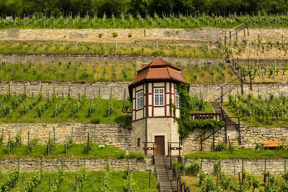 Viñas en terraza, Freyburg pixabay.com
